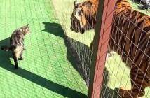 仲良しなトラと猫