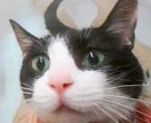 お風呂に入るのが大好きな猫さん。お風呂の時間に飼い主さんに呼ばれると、とっても愛らしい反応が返ってきた ( *´艸`)♡
