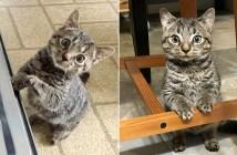 身体の小さな子猫