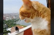 カラスと猫の会話