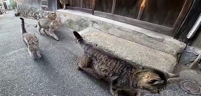キジトラ猫の国