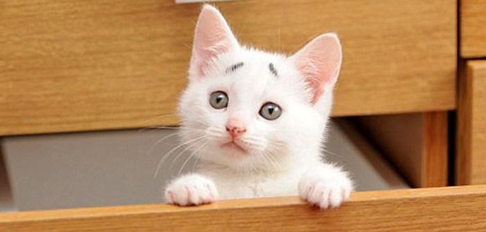いつも困った顔の眉毛子猫。その可愛さ溢れるおねだりに、誰も拒否することができなくて ( *´艸`)♡