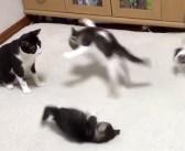 母猫に遊んでもらって喜びを爆発させる子猫達。幸せいっぱいの親子の姿を見ていると自然と元気が湧いてくる!