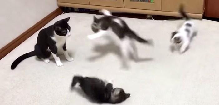 母猫と遊ぶ子猫達
