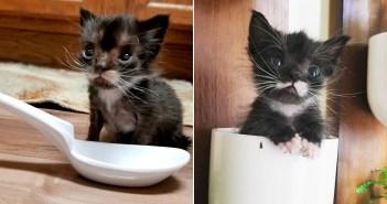 保護した時はスプーン程の大きさしかなかった子猫。優しい人達の力を借りて、たくましく成長していく姿に胸が熱くなる