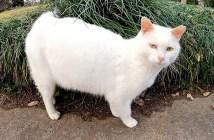 ツンデレな白猫