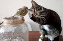 鳥を触る猫