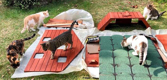猫ハウスと猫
