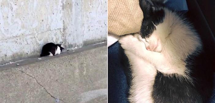 高速道路で保護された子猫
