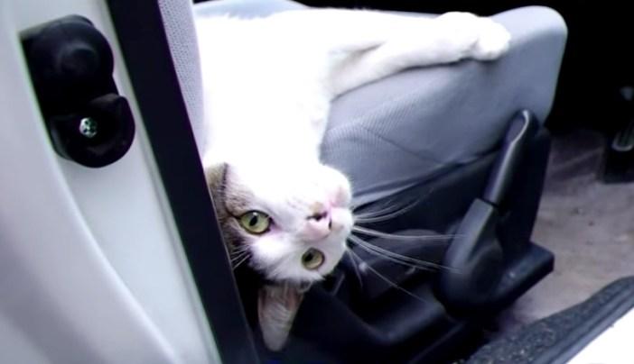 車の中にいた猫