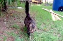 行方不明になった猫