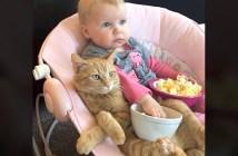 テレビに夢中の赤ちゃんと猫
