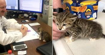 警察署長と子猫