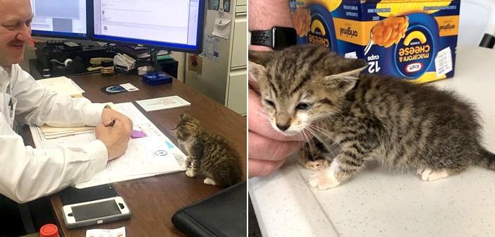 高速道路で保護されて、警察署にやって来た子猫。世話してくれた警察署長から離れられなくなり、そのまま家族の一員に♪