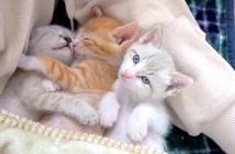幸せな子猫達