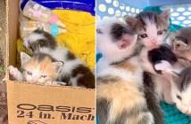 ダンボールの中から保護された子猫