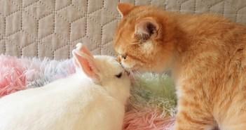 幼い頃からずっと一緒のウサギのことが大好きな子猫。お互いのそばから離れずに楽しい時間を過ごす姿に癒される♡