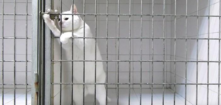 鍵を開ける猫