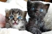 ミルクの時間を迎えた子猫達