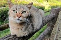 手摺りに座る猫