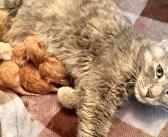 保健所で助けを待っていた妊娠中の猫。遠くから駆けつけてくれた優しい人達のおかげで、元気な6匹の子猫を無事に出産
