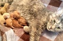 6匹の子猫と猫