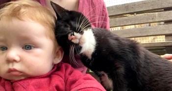 赤ちゃんにスリスリする盲目の猫
