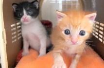 警察署に持ち込まれた子猫達