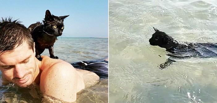海好きの猫
