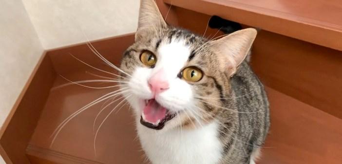 何かを訴えかけてくる猫さん。気持ちを伝えようと一生懸命に話しかけてくる姿が可愛くて、思わず胸がキュンとする♡