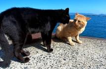 喧嘩をする猫達