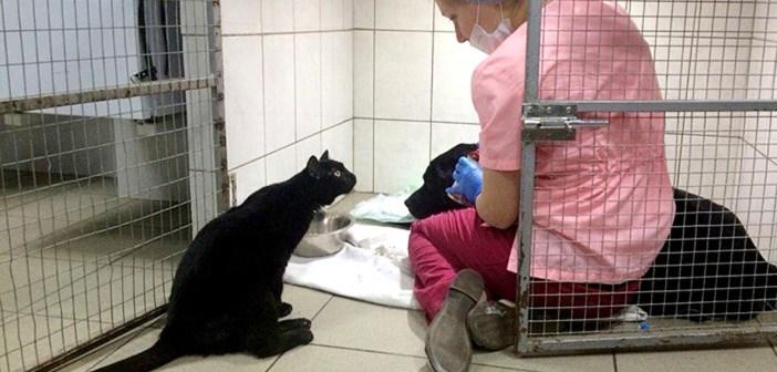 動物病院で一命を取り留めた猫。不自由な足にも負けず、病気で弱った動物達を励まし続ける