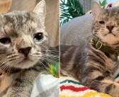 生まれた時から障がいを抱えていた子猫。ずっと待ち望んでいた家族に出会うと、元気いっぱいの幸せな猫へと生まれ変わる