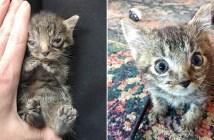 小さかった子猫