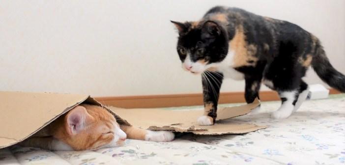 母猫に叱られて、ダンボールの下でふて寝してしまった子猫。でもすぐに幸せいっぱいの時間がやって来ました ( *´艸`)♡
