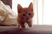 ゆっくりと近づく子猫