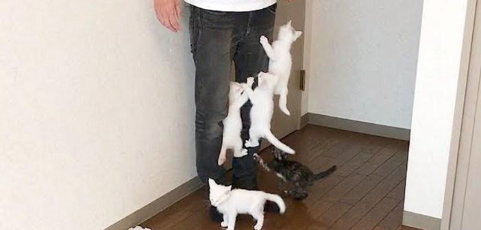 よじ登る子猫達