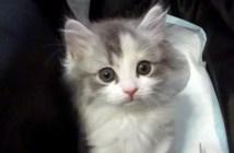家に来た子猫