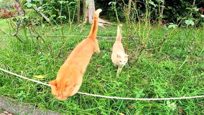 飛んでくる猫達