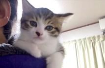 肩乗り子猫