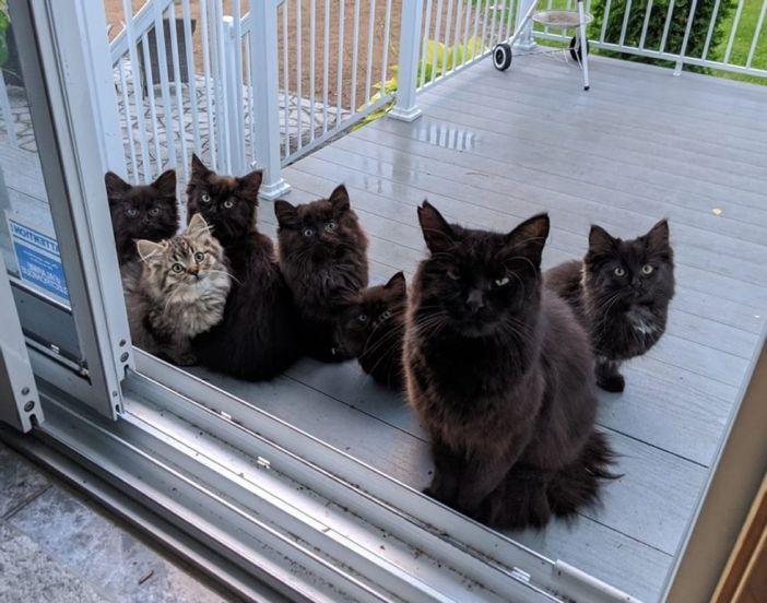 家の庭に現れた猫の親子