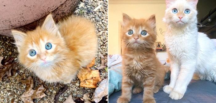 仲良くなった子猫と先住猫