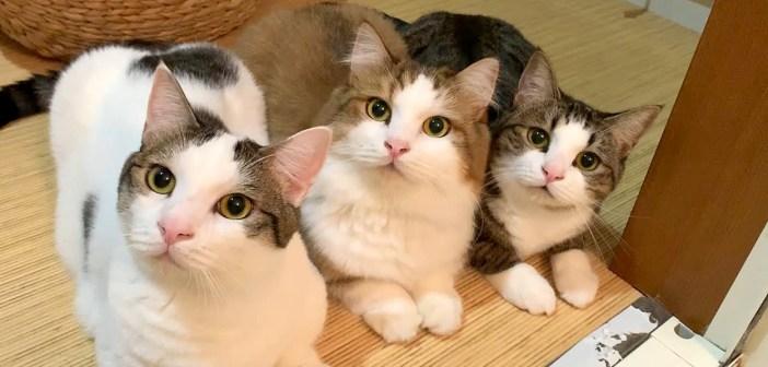 お風呂掃除を応援する猫達
