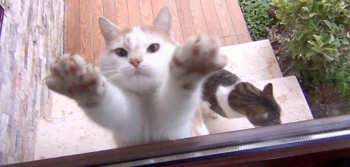 無言の圧力をかける猫