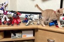 ガンプラと子猫