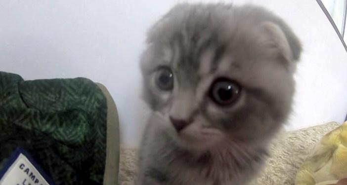 おはようを言いに来た子猫