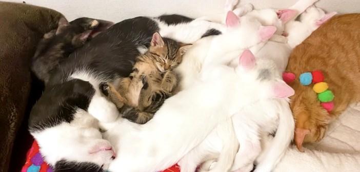 可愛い猫団子