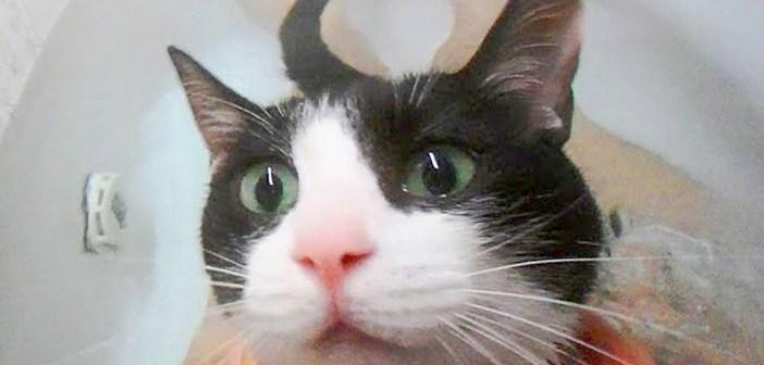 お風呂好きの猫