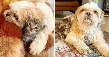 子猫を守る犬
