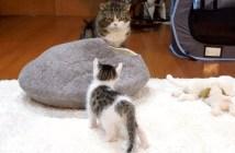 猫達の対面